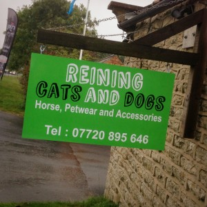 Reining Cats & Dogs
